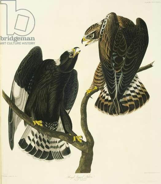 Buteo lagopus, rough-legged buzzard, Plate 422 from John James Audubon's Birds of America, original double elephant folio, 1827-30 (hand-coloured aquatint)