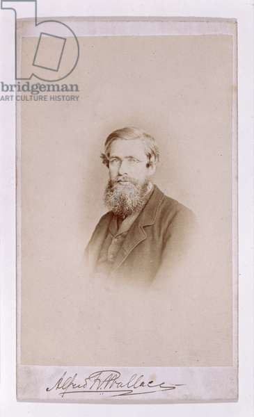 Alfred Russel Wallace (sepia photo)