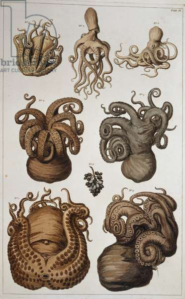 Seven squid and octopuses