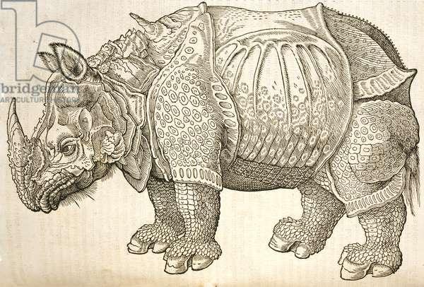 Rhinocerotidae, from page 953 of Historiae Animalium, Vol. 1 De Quadrupedibus Viviparis, 1555-58 (woodcut)