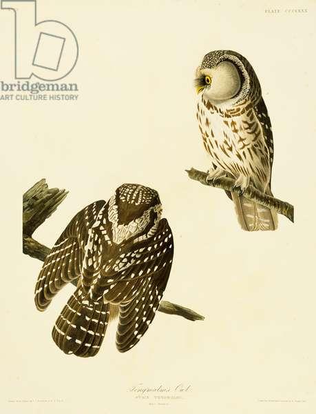 Aegolius funereus, Tengmalm's owl, Plate 380 from John James Audubon's Birds of America, original double elephant folio, 1827-30 (hand-coloured aquatint)