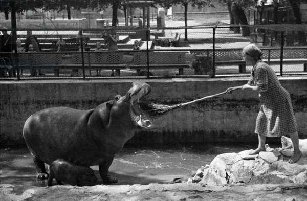 4At the Moscow Zoo, 1944, Anatoliy Garanin/Sputnik (photo)