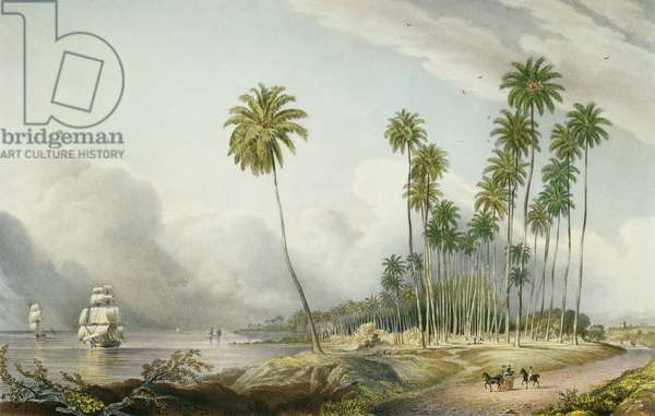 Cocoa Nut Walk on the Coast, Near Runaway Bay, plate 15 from 'West Indian Scenery: Illustrations of Jamaica', engraved by the artist, pub. 1838-40 (colour litho)