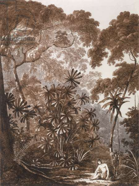 The Fan Palm in the Island of Cracatoa, from 'Views in the South Seas', pub. 1788 (etching)