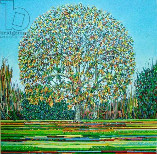 Bow Tree Autumn, (oil on canvas)