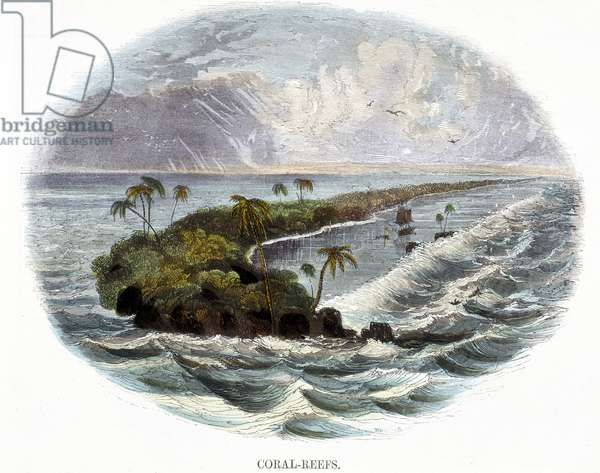 Coral-Reefs, from 'Phenomena of Nature', 1849 (coloured engraving)