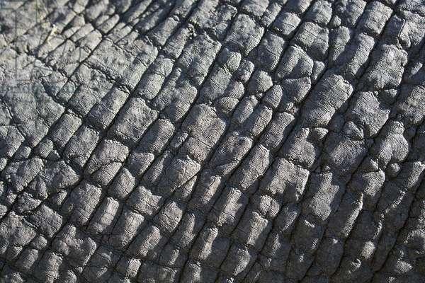 Close up of elephant hide (photo)