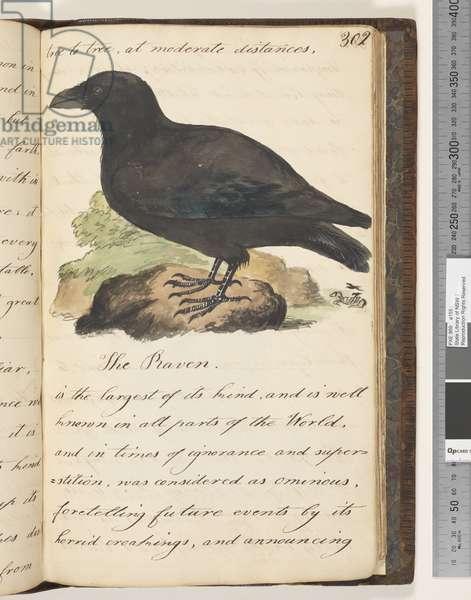 Page 302. The Raven, 1810-17 (w/c & manuscript text)