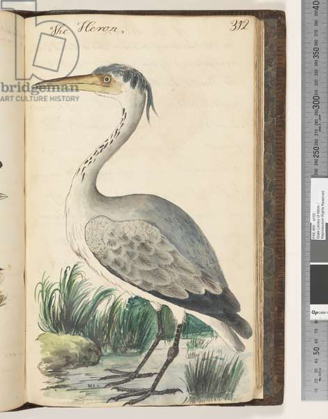 Page 312. The Heron, 1810-17 (w/c & manuscript text)