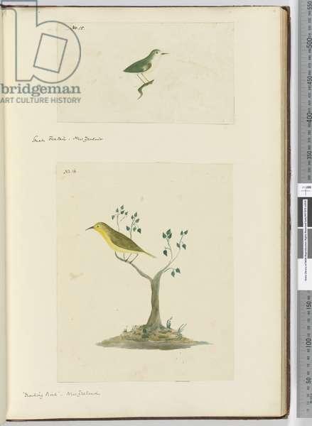 F.15 Small fantail. New Zealand // F.16 'Mocking bird.' New Zealand, 1772-75 (w/c)