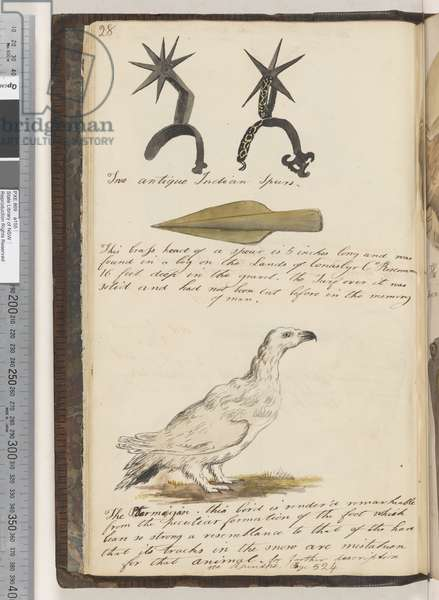 Page 28. Two antique Indian Spurs; this brass head of a spear is 5 inches long; the Ptarmigan, 1810-17 (w/c & manuscript text)