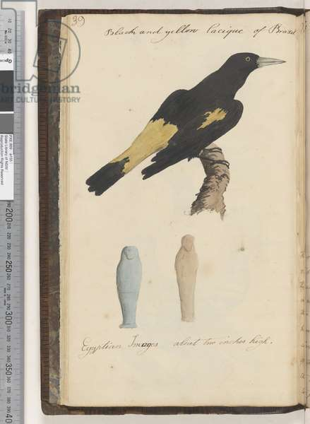 Page 39. Black and yellow Lacique of Brazil; Egyptian images 2 drawings, 1810-17 (w/c & manuscript text)