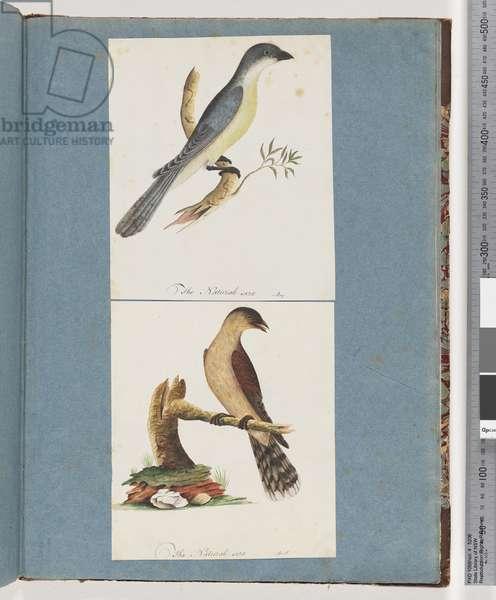 Page 138. Unidentified Bird. 139. Unidentified Bird (w/c on paper)