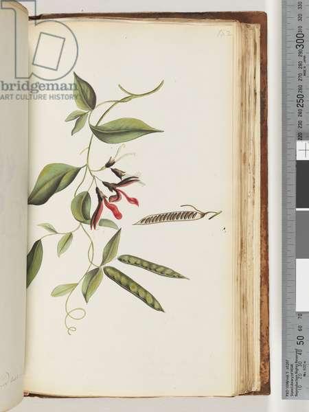 Page 182. Unidentified plant (w/c)