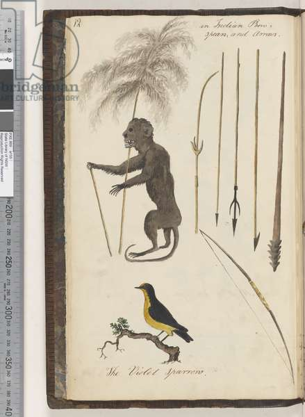 Page 12. An Indian bow, spears, and arrows; the Violet Sparrow, 1810-17 (w/c & manuscript text)