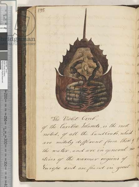 Page 195. The Violet Crab, 1810-17 (w/c & manuscript text)