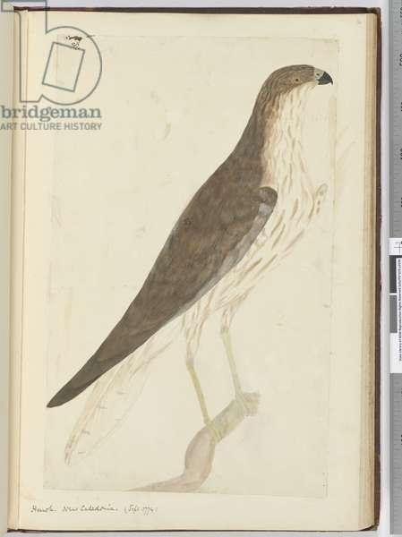 F.32 Hawk. New Caledonia. (Sept. 1774), 1772-75 (w/c)