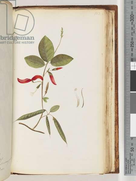 Page 183. Unidentified plants (w/c)