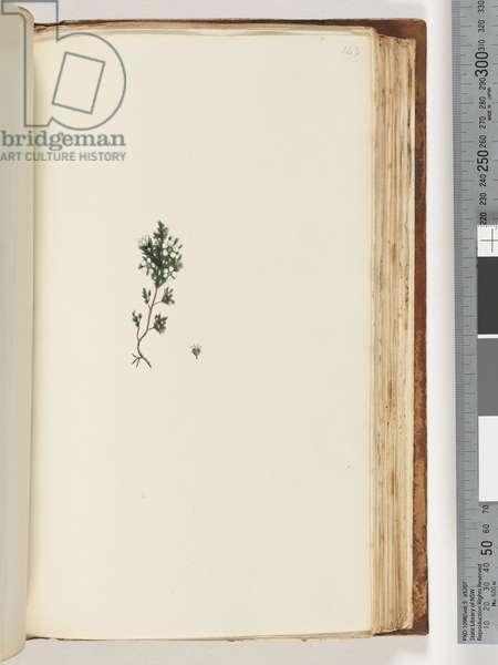 Page 143. Unidentified plant (w/c)