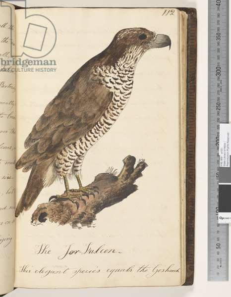 Page 112. The Jer Falcon, 1810-17 (w/c & manuscript text)