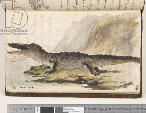 Page 204. The Crocodile, 1810-17 (w/c & manuscript text)