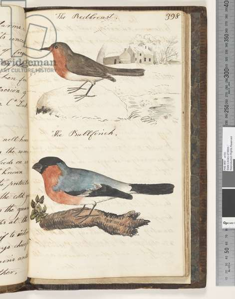 Page 398. The Redbreast; the Bullfinch, 1810-17 (w/c & manuscript text)
