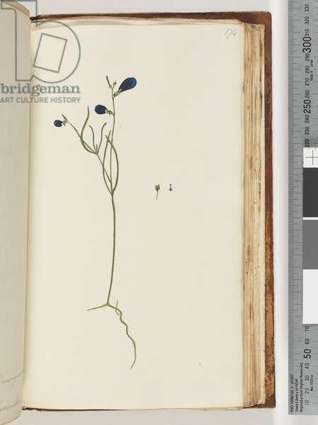 Page 174. Unidentified plant (w/c)