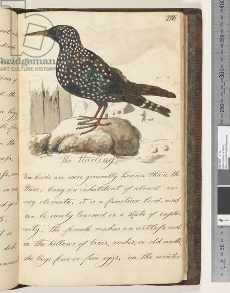 Page 276. The Starling, 1810-17 (w/c & manuscript text)