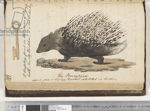 Page 177. A brass key found in the ruins of Burgess Castle; the Porcupine copied from a living animal, exhibited in Dublin, 1810-17 (w/c & manuscript text)
