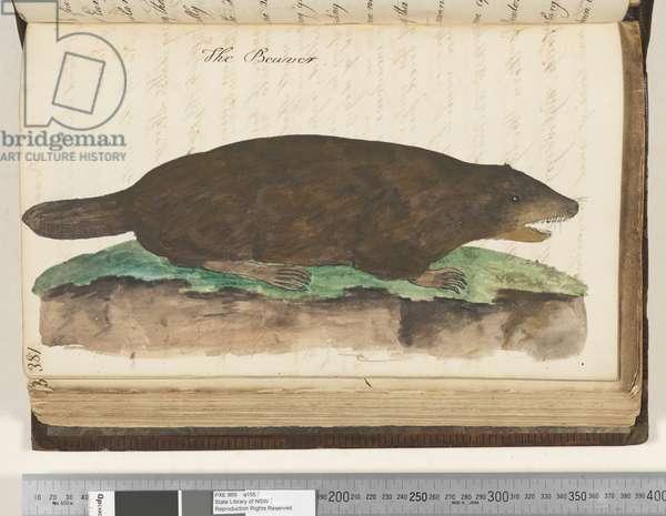 Page 381. The Beaver, 1810-17 (w/c & manuscript text)