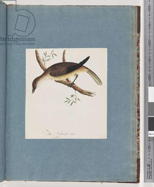 Page 108. Unidentified Bird (w/c on paper)