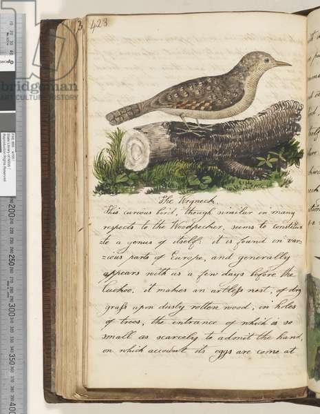 Page 423. The Wryneck, 1810-17 (w/c & manuscript text)