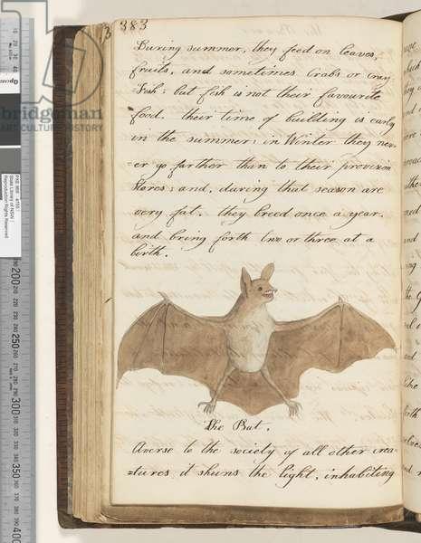 Page 383. The Bat, 1810-17 (w/c & manuscript text)