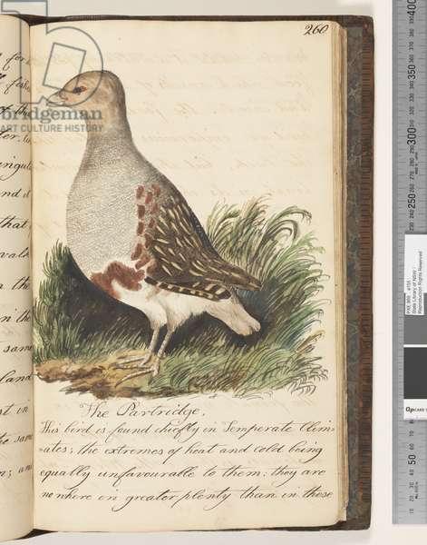 Page 260. The Partridge, 1810-17 (w/c & manuscript text)