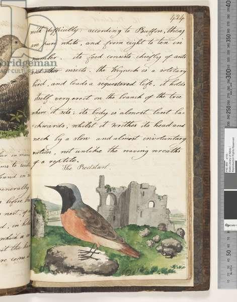 Page 424. The Redstart, 1810-17 (w/c & manuscript text)