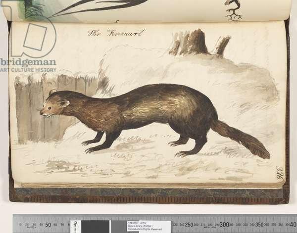 Page 326. The Foumart, 1810-17 (w/c & manuscript text)