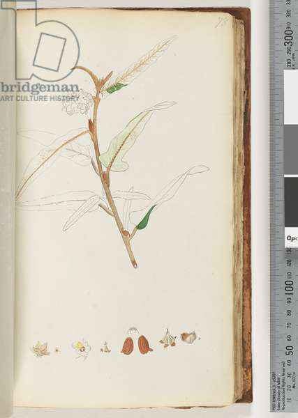 Page 78. No inscription, unfinished drawing (w/c)