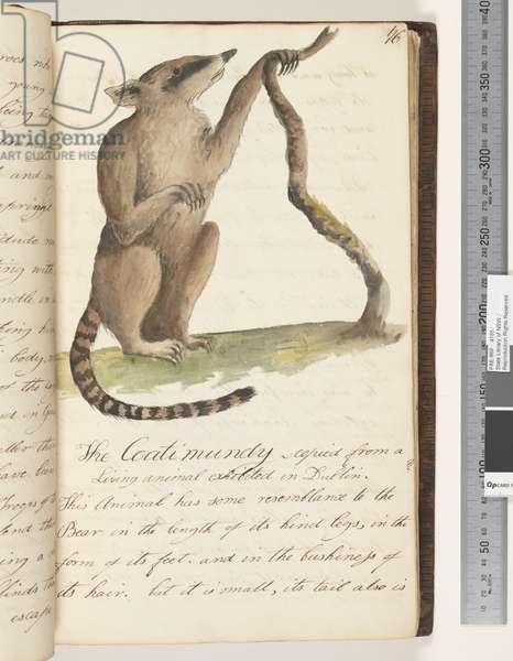 Page 76. The Coatimundy, 1810-17 (w/c & manuscript text)