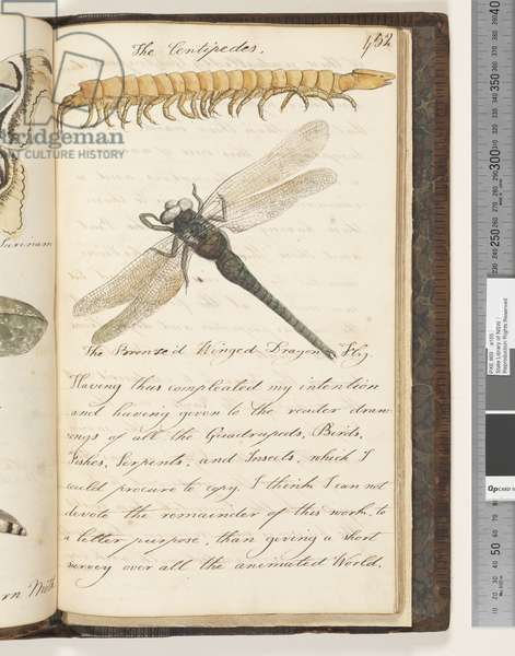 Page 452. The Centipedes; the Bronze'd Winged Dragon Fly, 1810-17 (w/c & manuscript text)