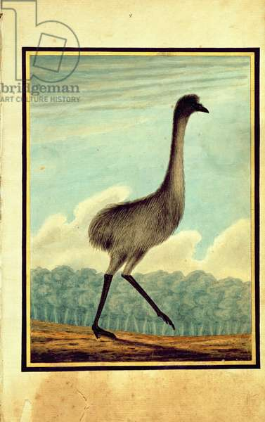 The Emue (sic), 1813 (w/c)