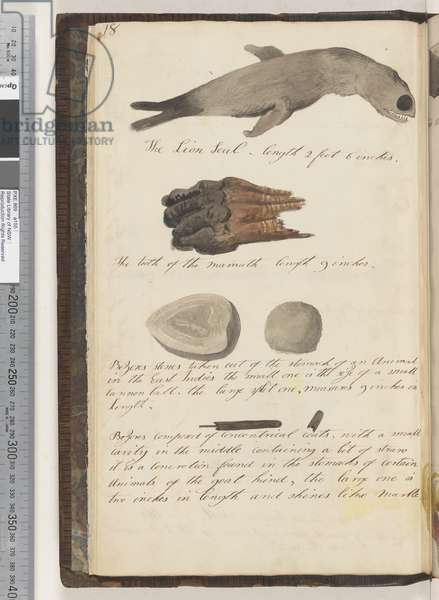 Page 18. The Lion Seal; the tooth of the Mammoth; bezores stones taken out of the stomach of an animal in the East Indies 2 drawings; bezores composed of concentrical coats 2 drawings, 1810-17 (w/c & manuscript text)