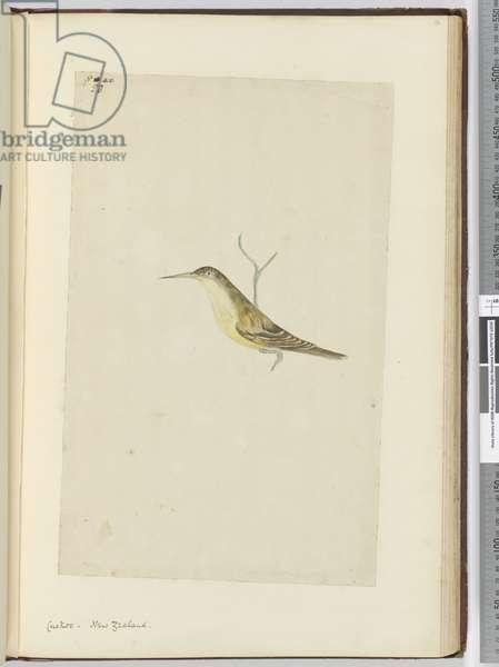 F.28 Cuckoo. New Zealand, 1772-75 (w/c)