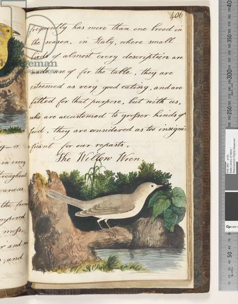 Page 406. The Willow Wren, 1810-17 (w/c & manuscript text)