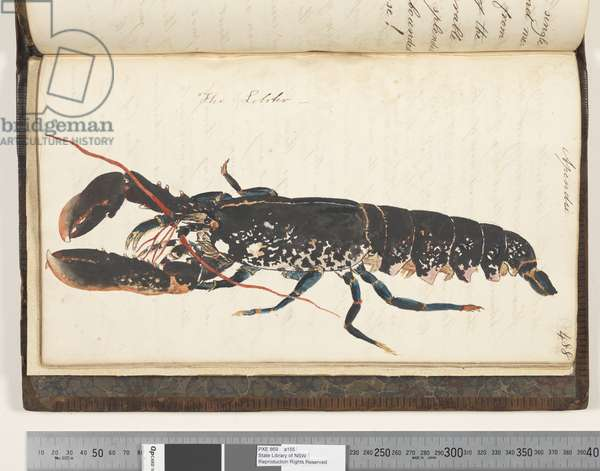 Page 488. The Lobster, 1810-17 (w/c & manuscript text)