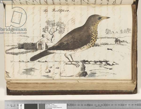 Page 407. The Fieldfare, 1810-17 (w/c & manuscript text)