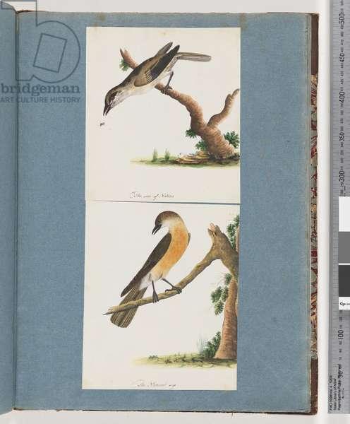 Page 133. Unidentified Bird. 134. Unidentified Bird (w/c on paper)
