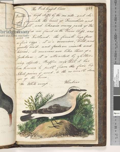 Page 428. The White-Rump, Wheatear, 1810-17 (w/c & manuscript text)