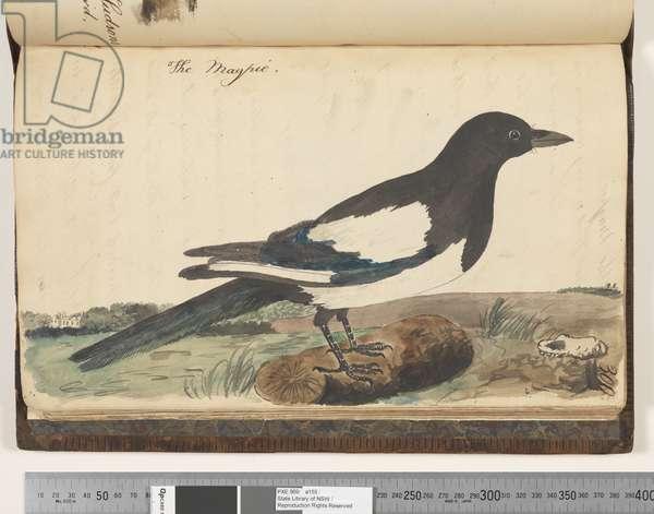 Page 300. The Magpie, 1810-17 (w/c & manuscript text)