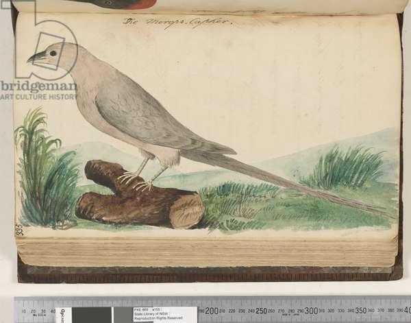 Page 335. The Merops Capher, 1810-17 (w/c & manuscript text)