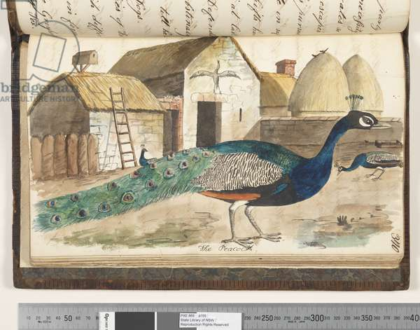 Page 370. The Peacock, 1810-17 (w/c & manuscript text)